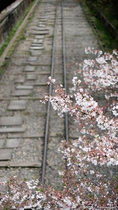 Old Railway over SAKURA.