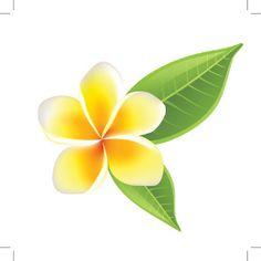 plumeria tattoos - Google Search