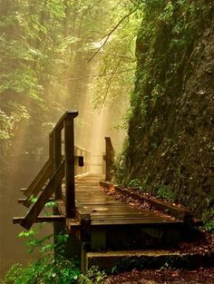 Forest path...