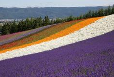 Japan flowergardens