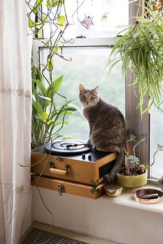 cat on record player in window with houseplants. / sfgirlbybay