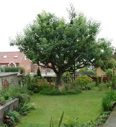 1000 images about my backyard bliss on pinterest apple tree brick