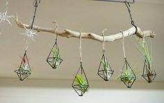 Kaori.:*:・'°☆さんはInstagramを利用しています:「セリアのコレめっちゃ気に入った♡ * エアプランツさんにぴったり:*:・(*´ω`pq゛ 流木にぶら下げたらいい感じ☆ * #セリア #エアプランツ #エアープランツ #観葉植物 #green #グリーンのある暮らし #インテリア #男前インテリア #流木」