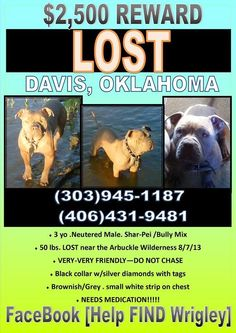 #DAVIS #OK #LOSTDOG 10-7-13 https://www.facebook.com/OKCAreaMissingPets/posts/590995847629534:0