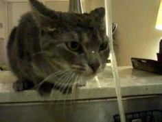 This cat is the most inefficient drinker - YouTube