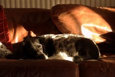 Billy - in a favourite spot Hanging Out, Cottage, Dogs, Animals, Animales, Animaux, Cottages, Pet Dogs, Doggies
