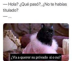 """123 Me gusta, 0 comentarios - Gatos Cool (@gatoscooloficial) en Instagram: """". . . #memesdegatoscool #gatoscool😸 #gatos_cool #privado #lapdance #wap #licenciado #memes #humor…"""""""