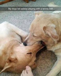Funny Animal Pictures Of The Day - 22 Pics http://ibeebz.com
