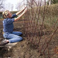 How to build a diamond-patterned twig trellis that is biodegradable, free, and will bring order to your climbing flower and vegetable beds. | Photo: Karen Bussolini | thisoldhouse.com
