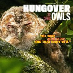 Hungover Owls 2012 Wall Calendar now featured on Fab.