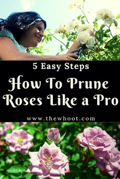 How To Prune Roses Properly Infographic Video Tutorial 5 Easy Steps To Prune Your Roses Like An Absolute Pro Tall Flowers, Growing Flowers, Planting Flowers, Flower Gardening, Planting Seeds, Home Vegetable Garden, Herb Garden, Garden Pests, Outdoor Plants