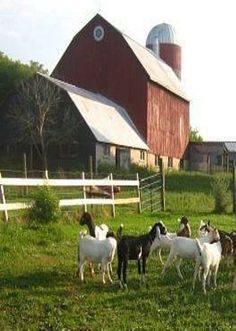 Country Living with Barn and Goats!