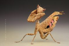"Macro Preying Mantis...""oh, you make me blush""!"