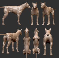 Wolf Anatomy Study WIP by vrajaparra Dog Anatomy, Anatomy Study, Animal Anatomy, Anatomy Drawing, Anatomy Art, Anatomy Reference, Art Reference, Anatomy Sculpture, Dog Sculpture