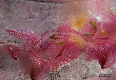 Flower Photography, Seed Pods, Berries, Frozen, Flowers, Image, Floral, Bury, Royal Icing Flowers