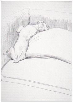 David Hockney: title unknown [dachshund asleep on couch]; graphite on paper.