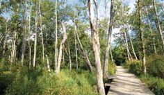 Haw River State Park, North Carolina. Boardwalk through wetlands at Haw River State Park.