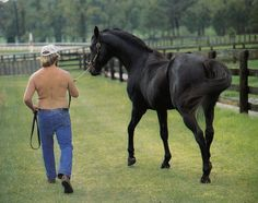 Carry Back Carry Back, Thoroughbred, Show Horses, Horse Racing, Animals And Pets, Sports, Sport, Race Horses