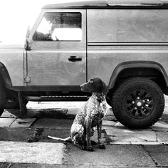 Land Rover and German Pointer.