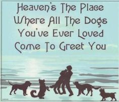 My vision of heaven ... after they cross the Rainbow Bridge!