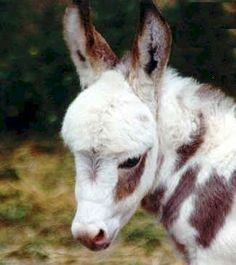 ♥ adorable donkey