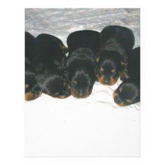 #Rottweiler Puppies Letterhead - #rottweiler #puppy #rottweilers #dog #dogs #pet #pets #cute