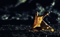 Autumn HD Wallpaper | Mediastaan