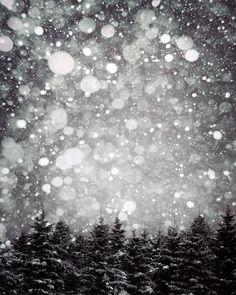 Items similar to Nordic Winter Print, Holiday Decor, Printable Fine Art Photo Christmas Trees, Scandinavian Art, on Etsy Green Wall Art, White Wall Art, Large Wall Art, Framing Photography, Winter Photography, Nature Photography, Christmas Photography, Landscape Photography, Winter Szenen