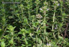 Healing, Herbs, Diet, Herb, Banting, Diets, Per Diem, Medicinal Plants, Food