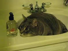 8 Cleaning Tips for Keeping a Multicat Home Spotless | Catster