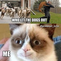 Who let the dogs out. Well, Grumpy cat, of course! Grumpy Cat Meme, Cat Memes, Cat Lovers, Cats, Funny Animals, Gatos, Cat, Grumpy Cats, Humorous Animals