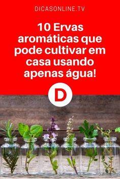 Plantar plantas aromaticas | 10 Ervas aromáticas que pode cultivar em casa usando apenas água! Organic Farming, Small Gardens, Garden Projects, Feng Shui, Aloe Vera, Bonsai, Gardening Tips, Home And Garden, Green