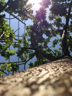 Árvore e céu