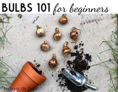 Autumn is time for planting those bulbs. We have some great tips to help beginners find their green thumb!