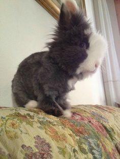 Rabbit coniglio