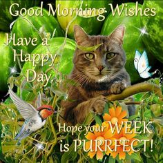 Good Morning Wishes, Have a Happy Day!!