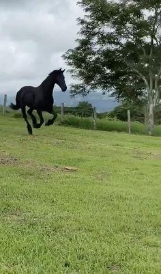 Beautiful Arabian Horses, Most Beautiful Horses, Animals Beautiful, Amazing Animal Pictures, Horse Pictures, Cute Horses, Pretty Horses, Nature Animals, Animals And Pets