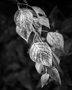 """""""Early Fall Leaves"""" by Anjin_nav"""