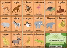* Size – 9 x Resources are for personal use only – at your home or classroom. Duplication of Klein Pikkewyn's products is against the Copyright Act. Zulu Language, English Language, Giraffe, Elephant, Classroom Charts, 1st Grade Math Worksheets, Xhosa, School Architecture, Zoo Animals