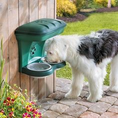 Show your pet how much you care with an elevated dog feeder. Tip: Make sure your pooch has plenty of water to drink when he/she's outside during the summer.