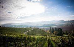 Rheingrafenberg: Weinlage vom Wein- und Sektgut Bamberger an der Nahe #Nahe #Nahewein #Riesling #Sekt #Bamberger #Meddersheim #Wein #Winzer #Weingut