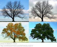4 seasons tree journal/booklet!
