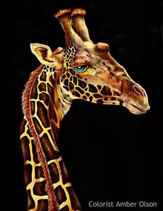 Giraffe by Amber Olson Gouache Painting, Fabric Painting, Adult Coloring Pages, Coloring Books, Giraffe Drawing, Giraffe Art, Animal Drawings, Art Drawings, Art Pictures