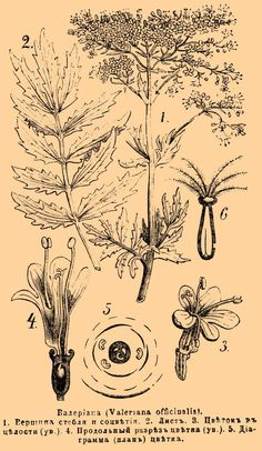 File:Brockhaus and Efron Encyclopedic Dictionary b9 411-0.jpg