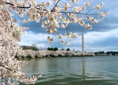 20 free things to do in Washington, DC  Read more: http://www.lonelyplanet.com/usa/travel-tips-and-articles/20-free-things-to-do-in-washington-dc#ixzz2z4zz7nuq