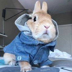 Bunny rabbit in jacket! Cute Baby Bunnies, Funny Bunnies, Animals And Pets, Baby Animals, Funny Animals, Bunny Care, Photo Chat, Cute Little Animals, Cute Creatures