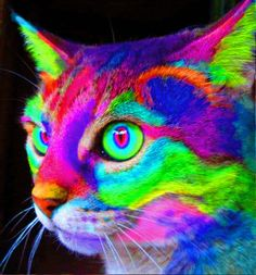 Wasn't sure if I should have labeled this under Animals or gifs...but either way, check out this sick psychadelic pussy cat! look into his eeyyeeeesssss.