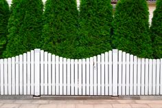 6 mistakes to avoid when planting arborvitae.Arborvitae is a tree with thick dark green foliage that will stay all year round and create a natural privacy screen. Brick Fence, Front Yard Fence, Farm Fence, Backyard Fences, Garden Fencing, Backyard Ideas, Gabion Fence, Low Fence, Fence Stain