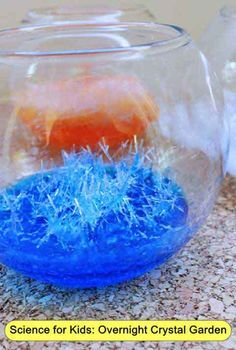 Science for Kids: Overnight Crystal Garden