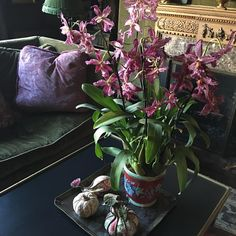 Orchids are always a good idea. Color, beauty and they last. #orchids #purple #livingroom #classic